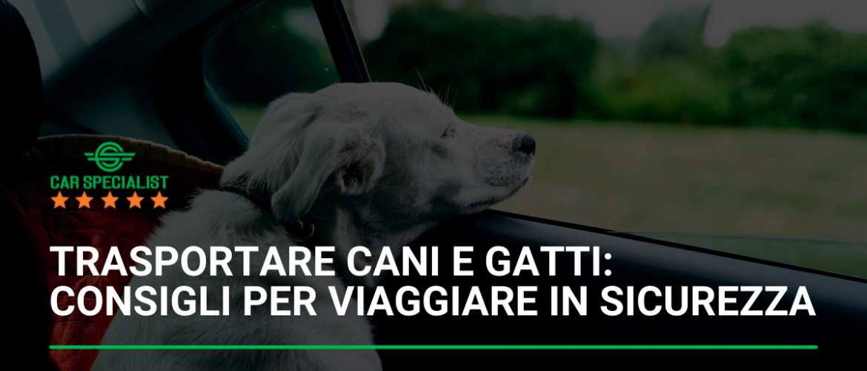 Trasportare cani e gatti: consigli per viaggiare in sicurezza